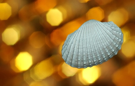 The Flying Seashell