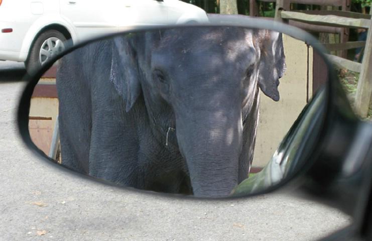 """""""Holey Elephant"""""""
