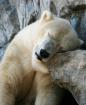 """Sleepy Time Tedd..."