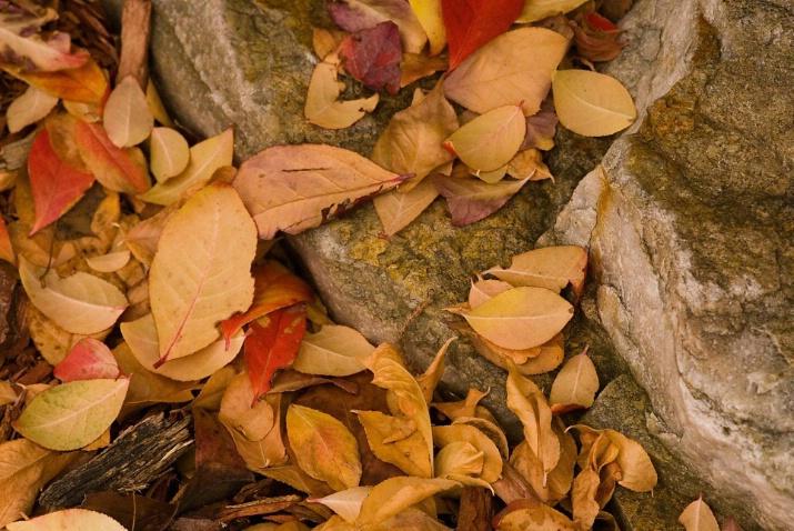 fall's final beauty II - ID: 3030563 © Sibylle Basel