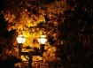 Lights and Leaves