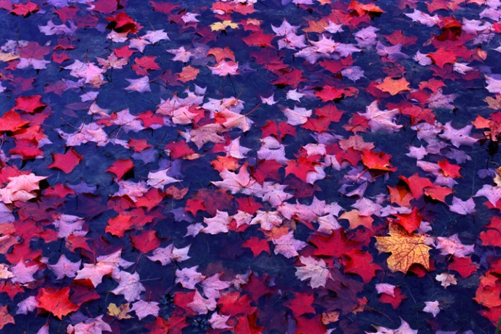 Red Leaves and Water - ID: 3031894 © Nora Odendahl