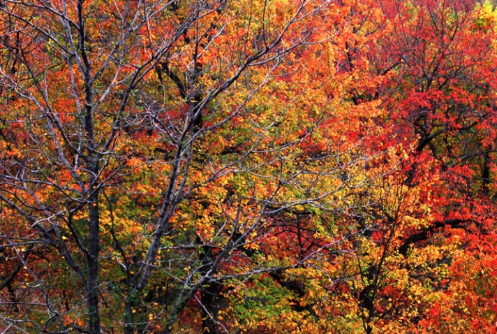Foliage at the Gunks - ID: 3031895 © Nora Odendahl