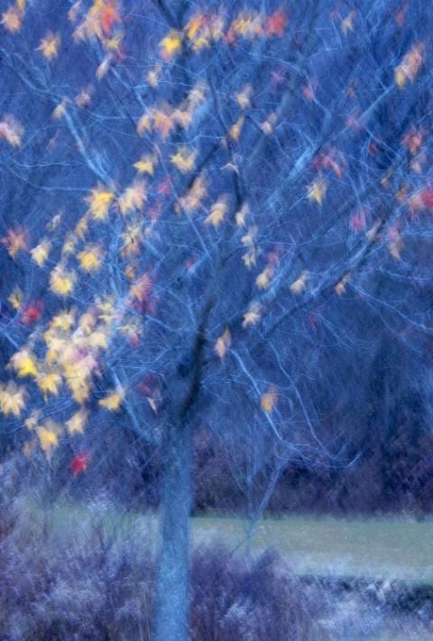 Last Leaves of Autumn