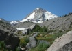 Mt Hood and Lupin...