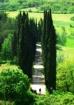 Cypress Lined Dri...