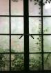 """Ivy Window 1..."