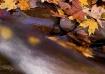 Potomac feeder cr...