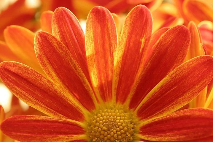 Feathered Flower - ID: 3068044 © Agnes Fegan