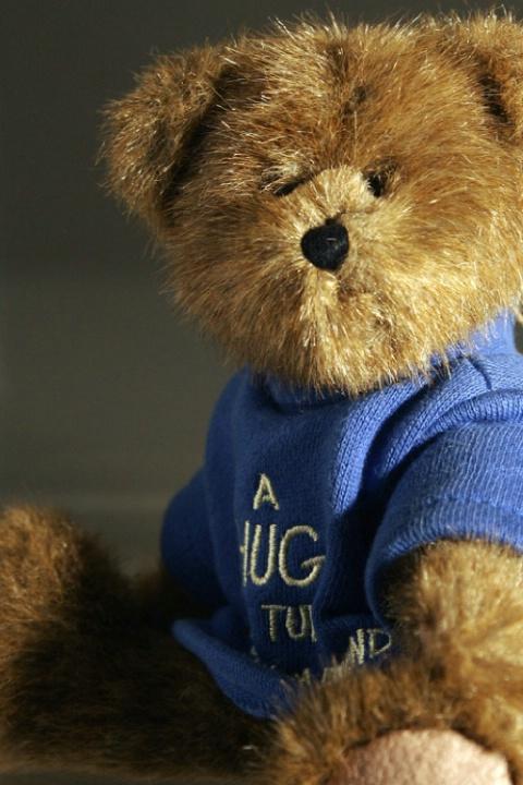 Teddy Beara Portrait 2