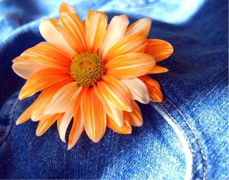 Blue Jeans and Daisies