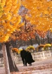 Autumn in the Gar...