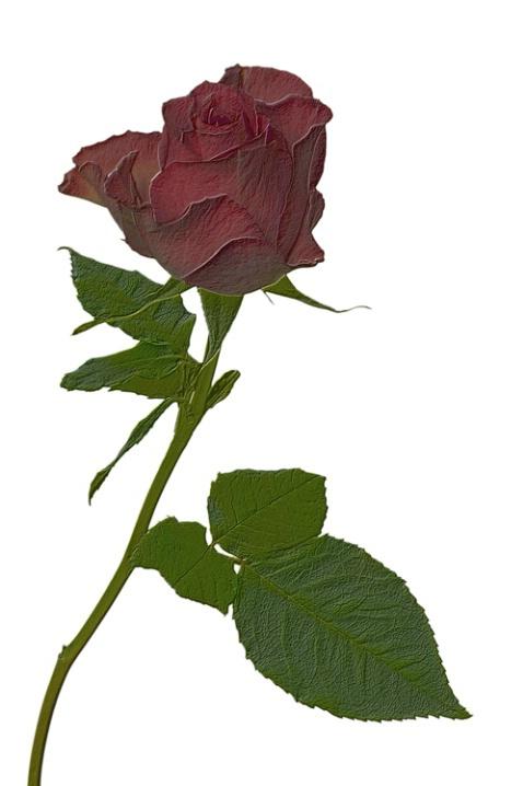 Rose Impression - ID: 3079979 © Ronald Balthazor