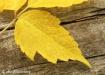 Autumn Pause