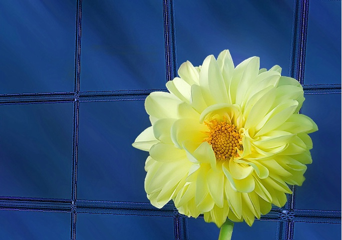 Office window with yellow flower