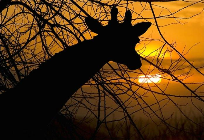 Sunset on the Serengeti - ID: 3092150 © Paul Knupp
