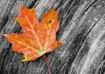 leaf on driftwood