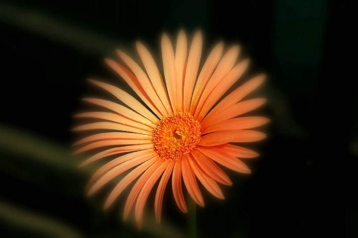 Beauty n glow