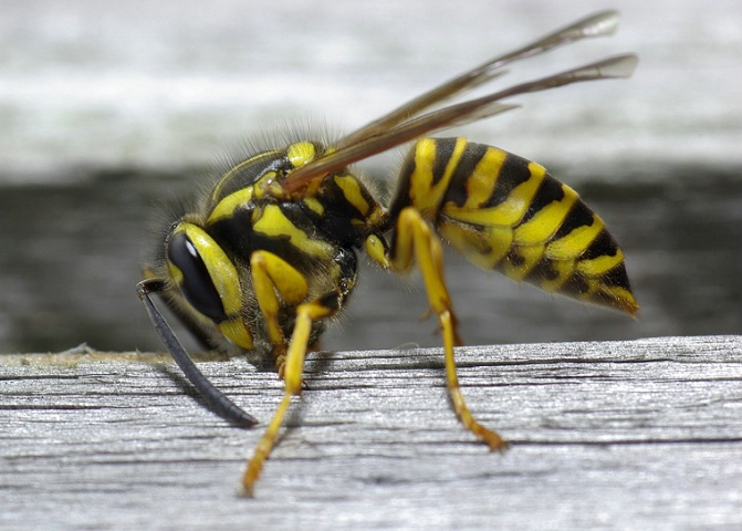 Paper wasp at work!!