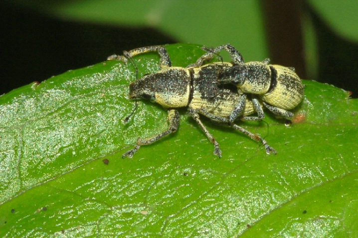 Insects Mating #5