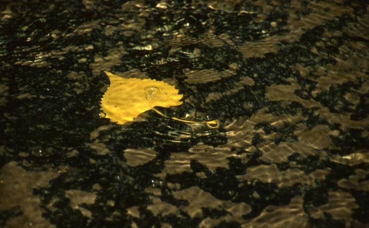 Stone Creek - Platte River State Park - Nebraska - ID: 3127394 © Larry Lightner