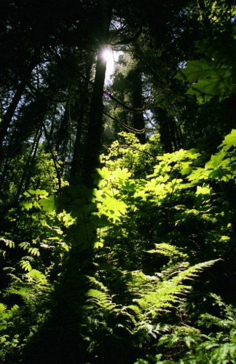 Columbia River Gorge - Oregon - ID: 3127484 © Larry Lightner