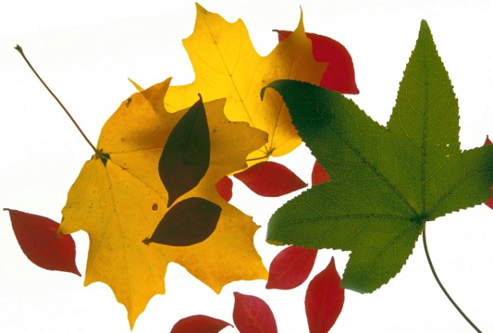 Leaves on Display