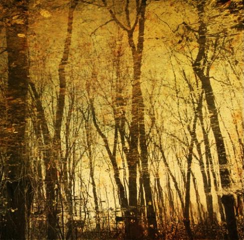 Liquid forest