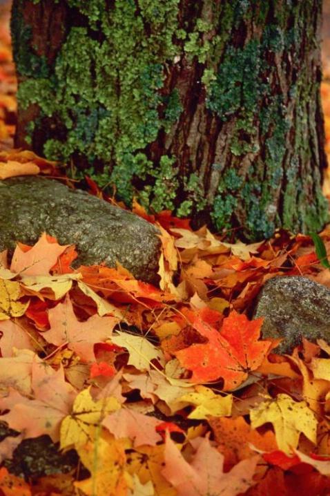 Leaves - ID: 3148409 © Deborah A. Prior