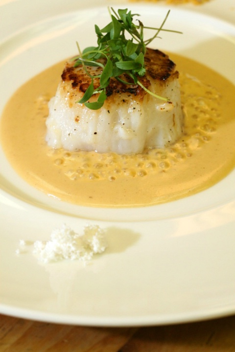Divers Scallop in melon seed milk