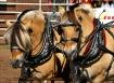 Fancy Ponies