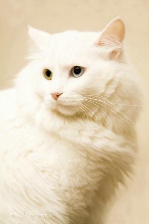 Fastidious Feline