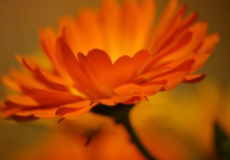 Flower's Edge