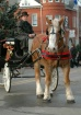 Horse and Carriag...