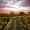 Evening Cart Path