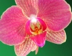 Orchid on green