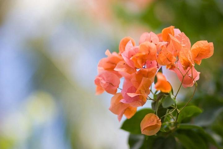 Flower +2