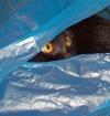 Zippy In A Bag