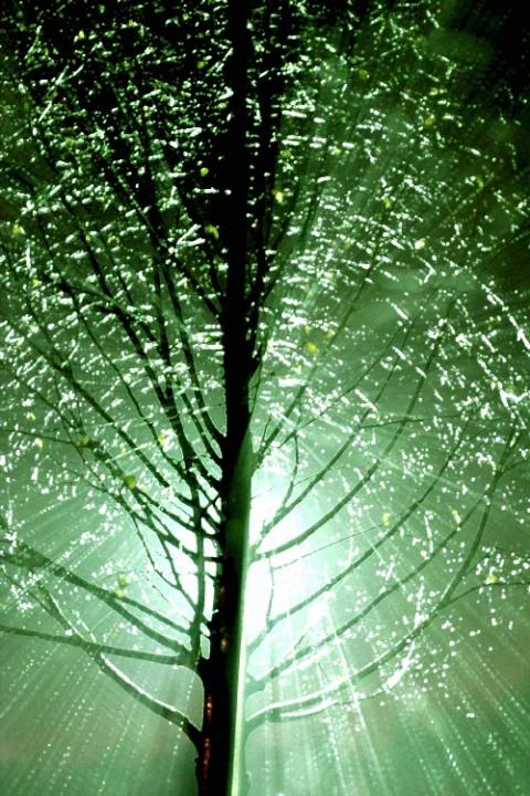 Rainy Night Tree