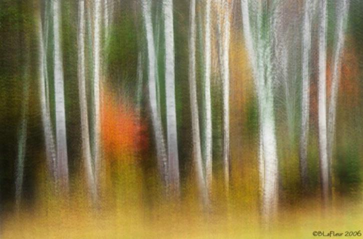 Birch Abstract - ID: 3206432 © Brenda W. LaFleur