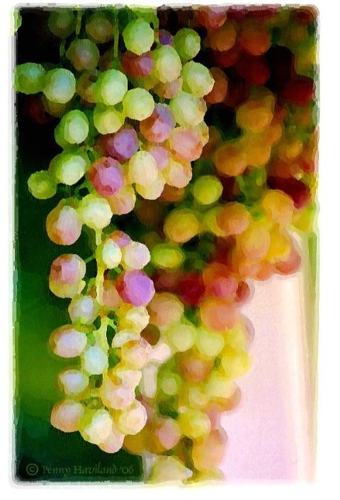 Washington Grape Vine