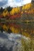 Fall Foliage & Cl...