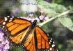 ~Monarch~