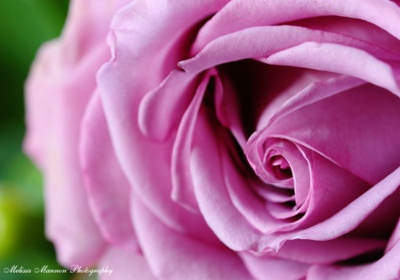 Le Visage de la Fleur