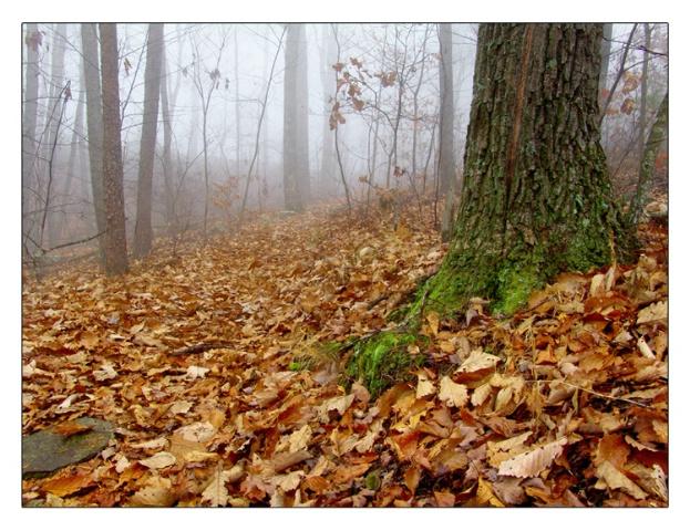 - Morning Mist -