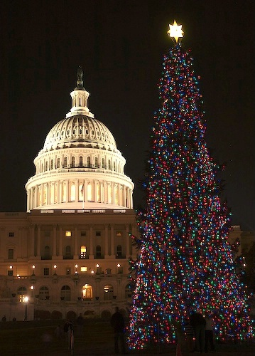 Christmas Tree at the Capital Washington DC