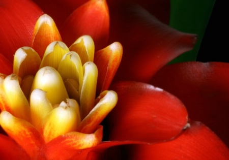 Bromeliad Close-up