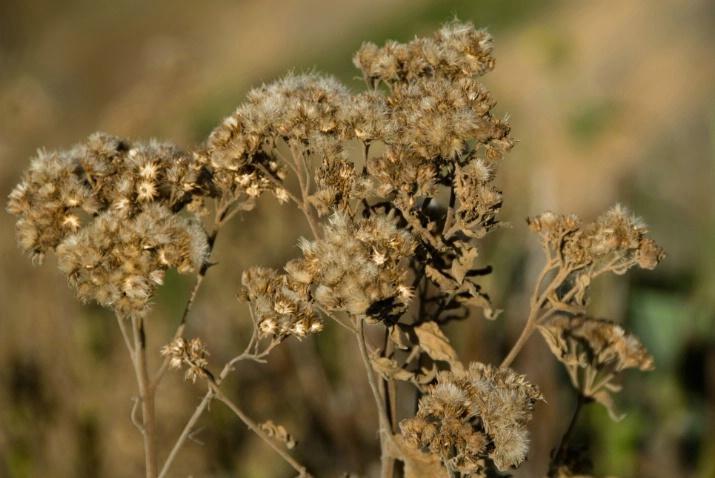 flower or weed
