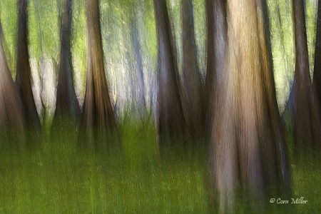 March of the Cypress