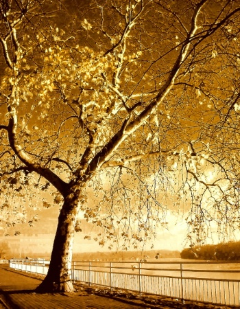 Golden tree